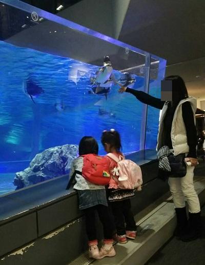 すみだ水族館のペンギン