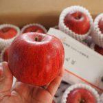 山形県天童市のりんご