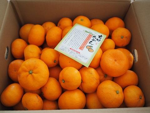和歌山県広川町の甘味たっぷり有田みかん