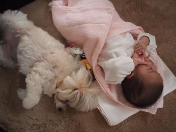 愛犬とkaboちゃん