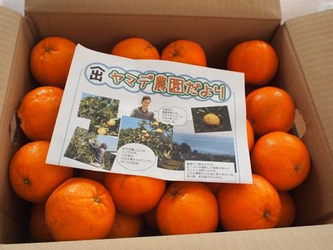 高知県須崎市の安和ポンカン