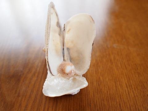 貝の宝石入れ