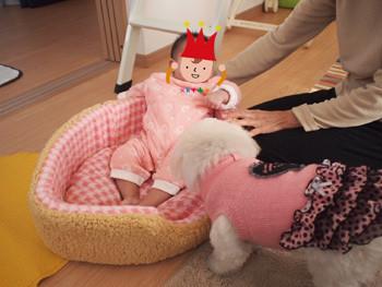 犬のベッドに赤ちゃん入る