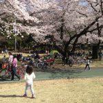 所沢航空公園で花見