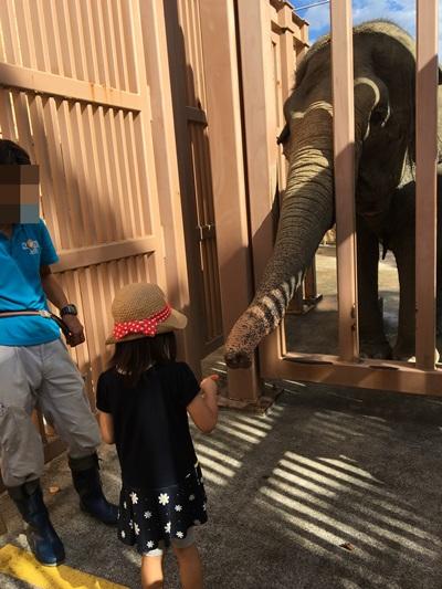 かみね動物園ゾウのえさやり