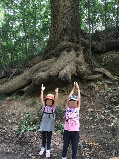 木のポーズ