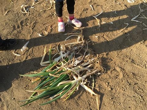 むさしの村野菜収穫体験
