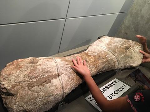 イグアノドン類の足跡化石