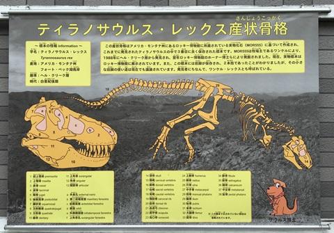 産状骨格 ティラノサウルス