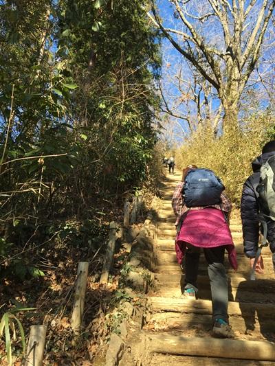 稲荷山コース240段の丸太