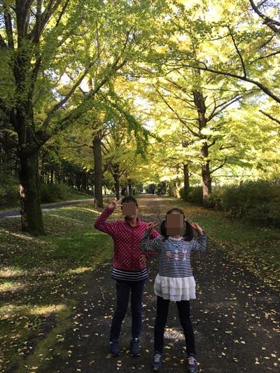 昭和記念公園銀杏